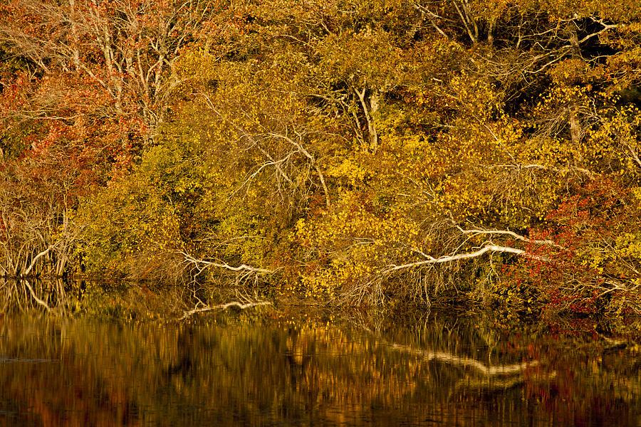 Fall On Cape Cod 27 Photograph