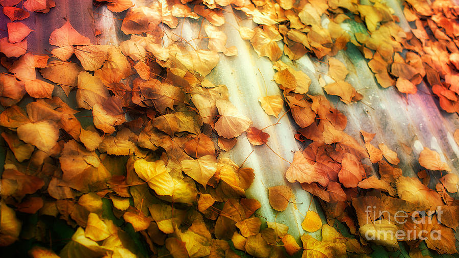 Photograph - Fall On The Roof by Bobbi Feasel