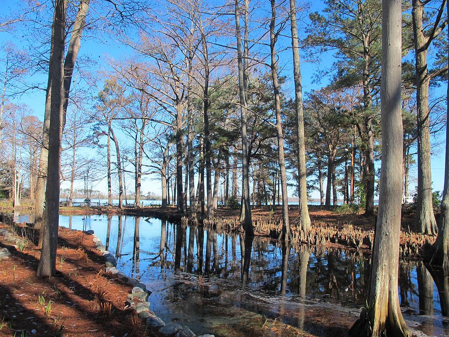 Nature Photograph - Fall Reflections And Shadows  by Valia Bradshaw