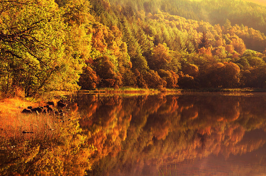 Scotland Photograph - Fall Reflections. Loch Achray. Scotland by Jenny Rainbow