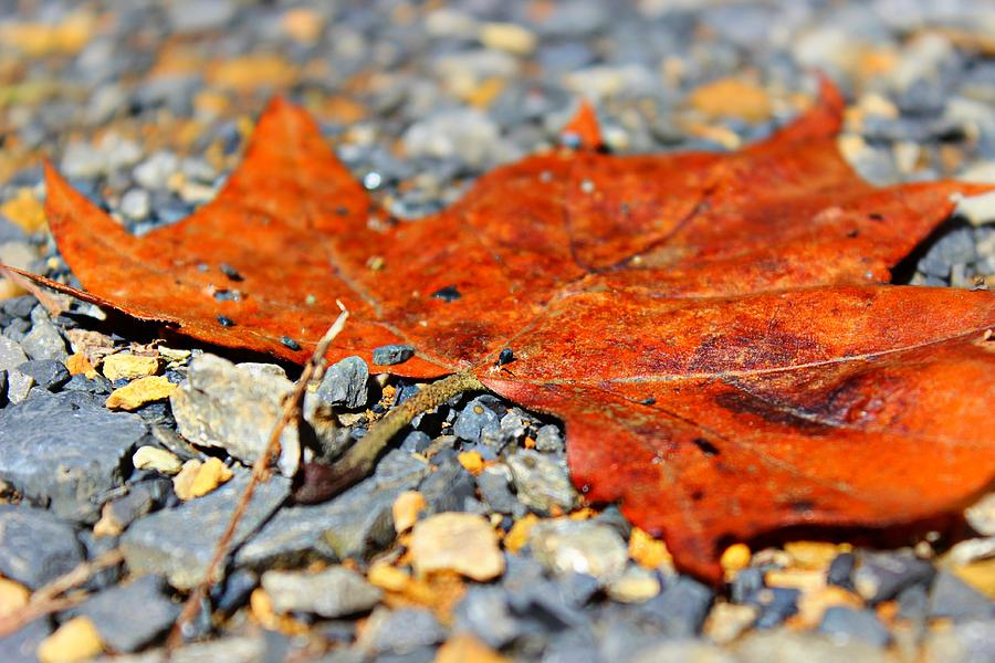 Fall Photograph - Fall Road by Candice Trimble
