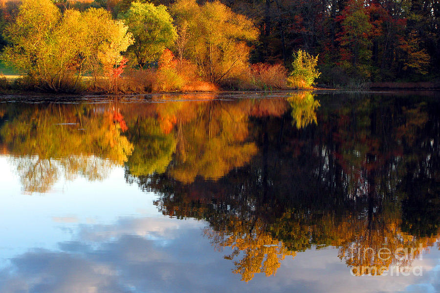 Trees Photograph - Fall Scene by Olivier Le Queinec