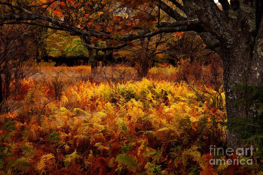 Dolly Sods Painting - Fall Shadows - Dolly Sods West Virginia by Dan Carmichael
