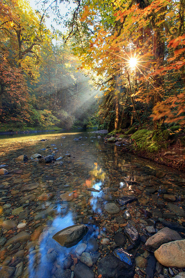 Fall Sparkle Photograph by Pamela Winders