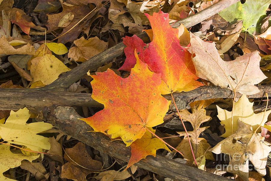 Arboretum Photograph - Fall by Steven Ralser