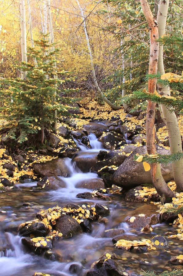 Fall Stream by Mark Robert Bein
