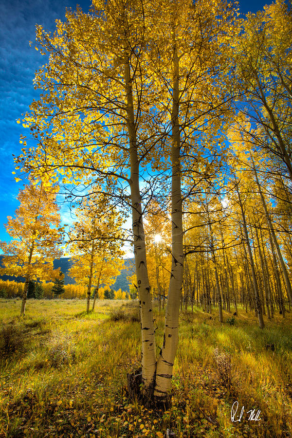 Aspen Photograph - Fall Sunrise by Rick Machle