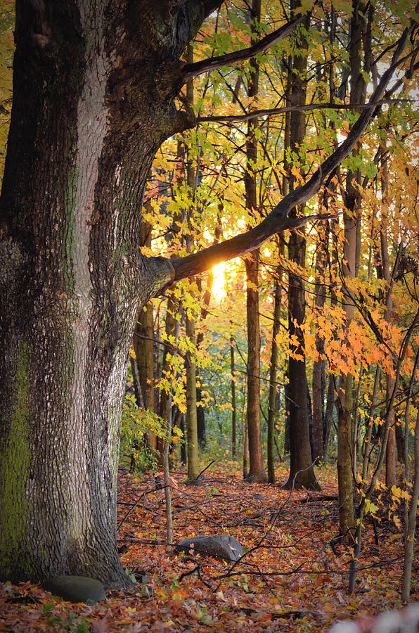 Fall Photograph - Fall Sunset by Jennifer  King