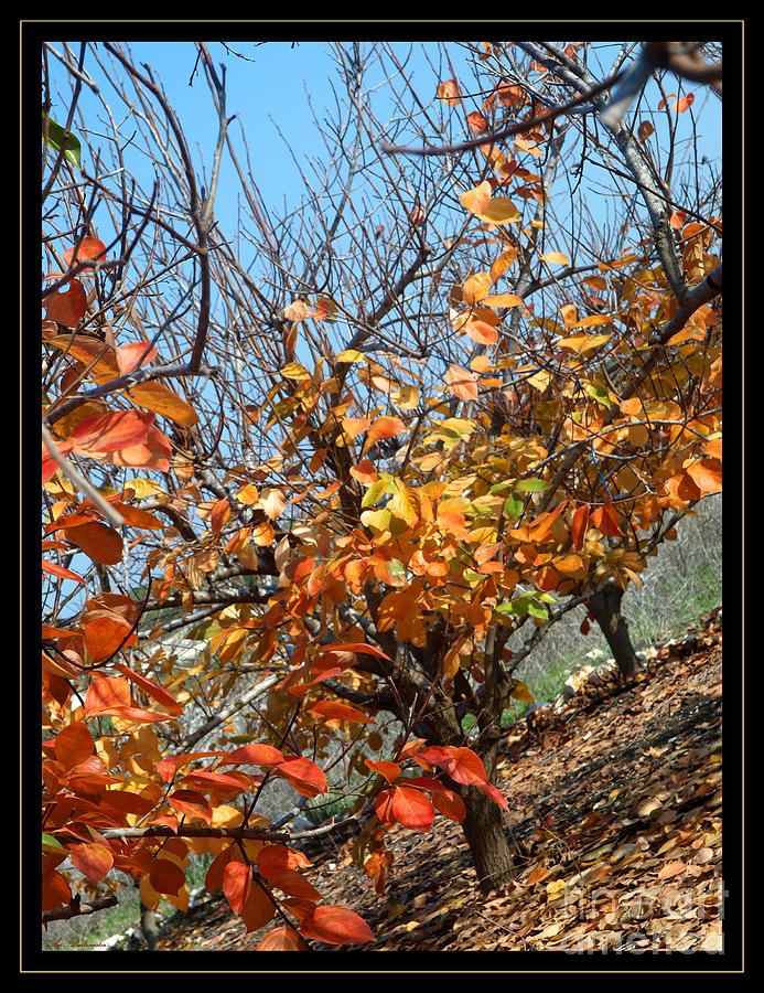 Autumn Photograph - Fall Time by Arik Baltinester