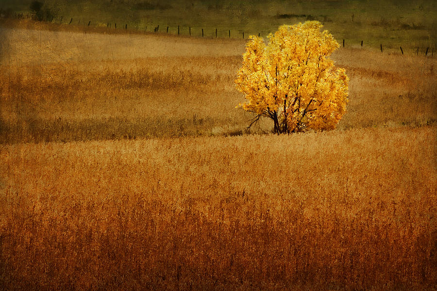 Agricultural Photograph - Fall Tree And Field #1 by Nikolyn McDonald