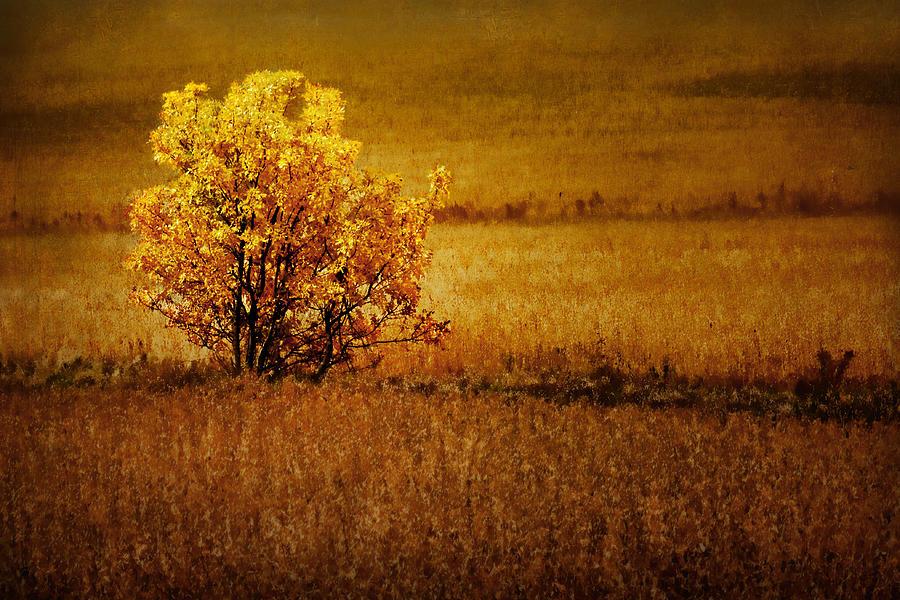 Tree Photograph - Fall Tree And Field #2 by Nikolyn McDonald