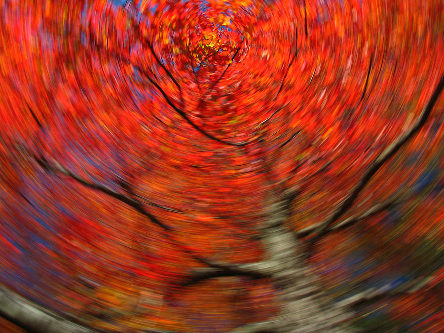 Intentional Camera Movement Photograph - Fall Tree Carousel by Juergen Roth