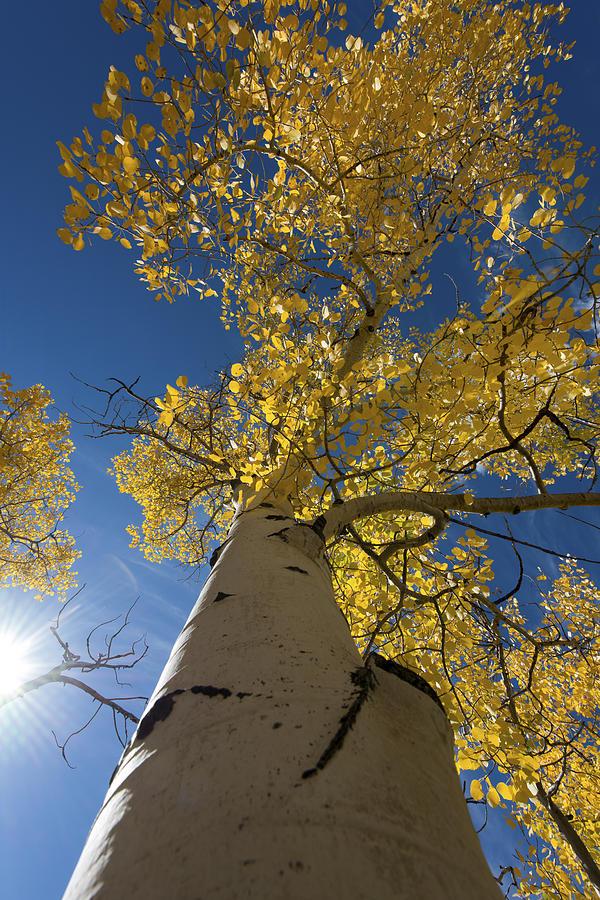 Tree Photograph - Fall Tree by David Yack
