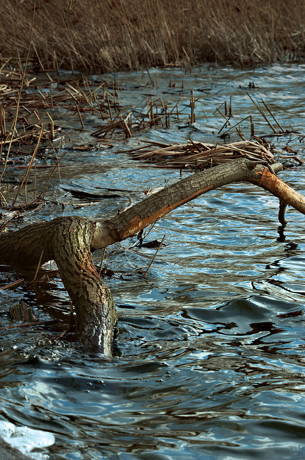 Branch Photograph - Fall Waters by Mike Feraco