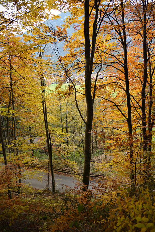 Fall Photograph - Fall Woods by Marie Sullivan