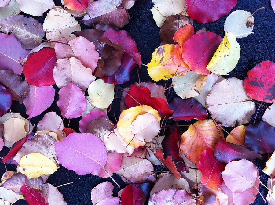 Fall Leaves Photograph - Fallen Beauty by Lyn Pacific