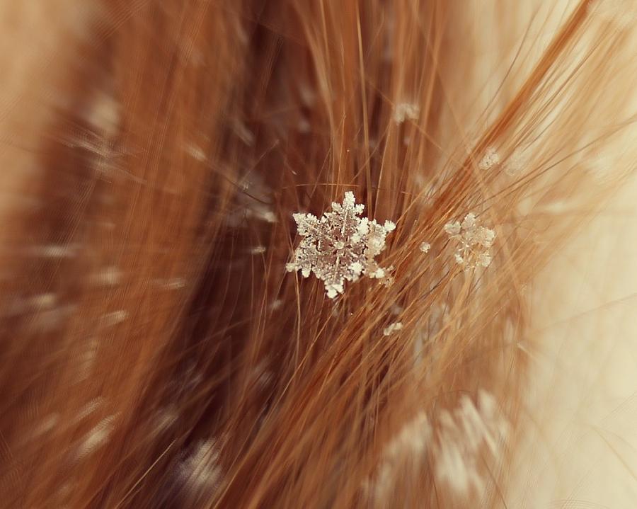 Winter Photograph - Fallen Flake by Candice Trimble