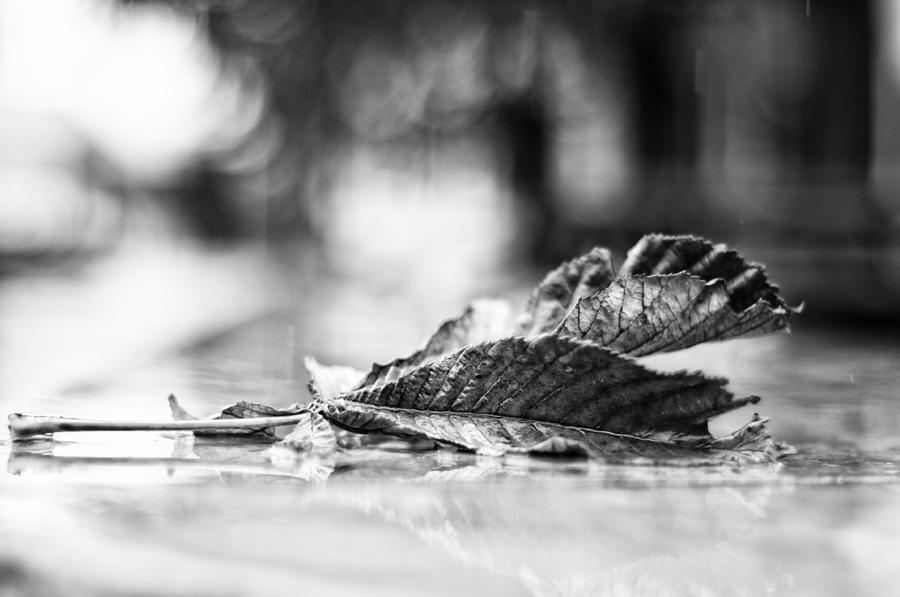Leaves Photograph - Fallen Friendship by Miguel Winterpacht