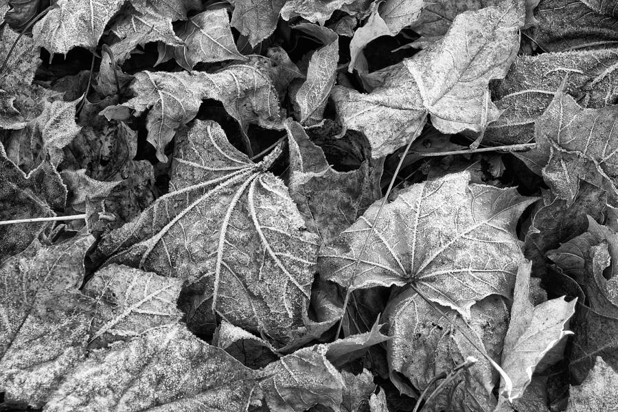 Black And White Photograph - Fallen by Jeff Sinon
