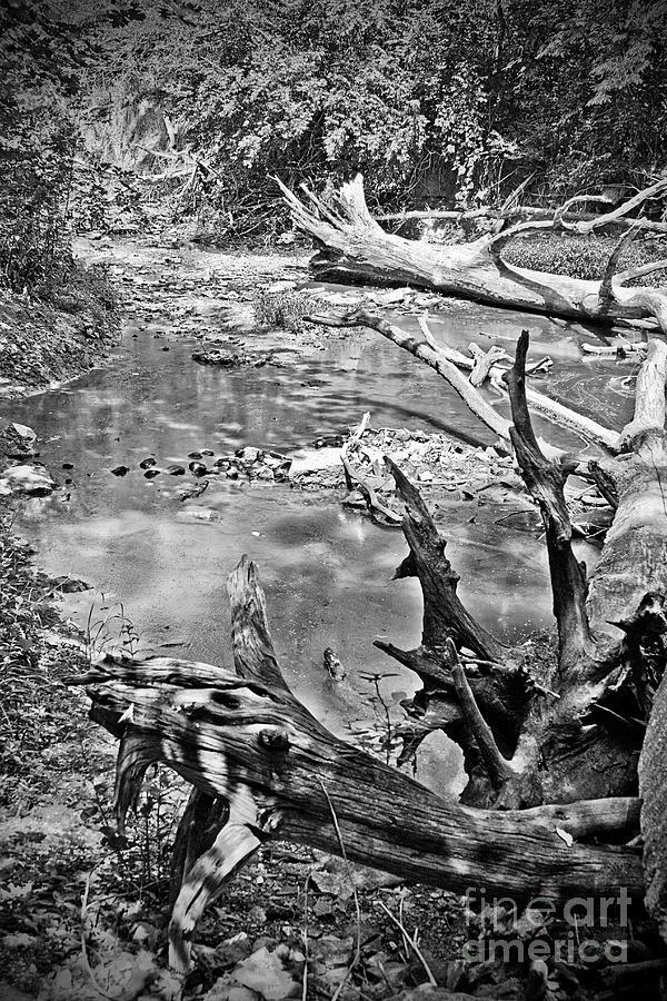 Black Photograph - Fallen by Joe Russell