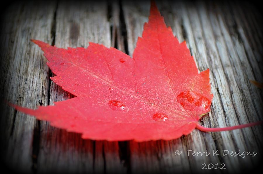 Leaf Photograph - Fallen Leaf by Terri K Designs
