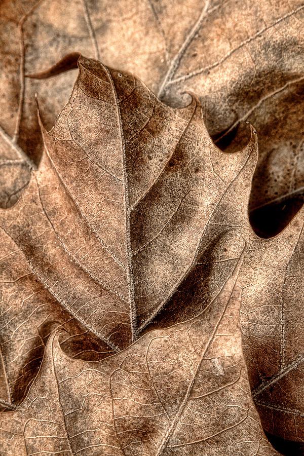 Leaf Photograph - Fallen Leaves I by Tom Mc Nemar