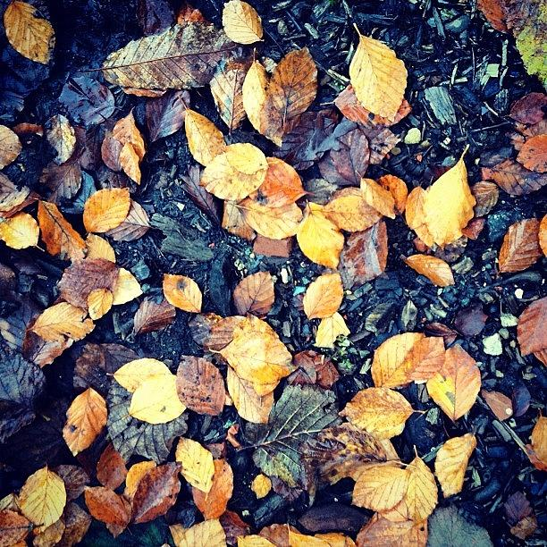 Squirrell Photograph - Fallen Leaves by Nic Squirrell