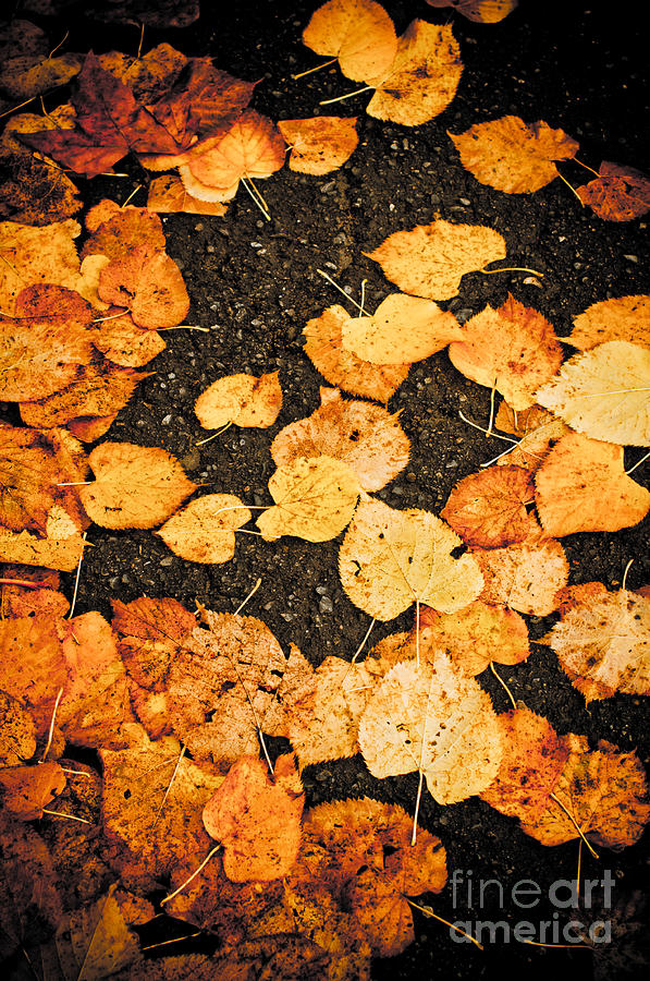 Abstract Photograph - Fallen Leaves by Silvia Ganora