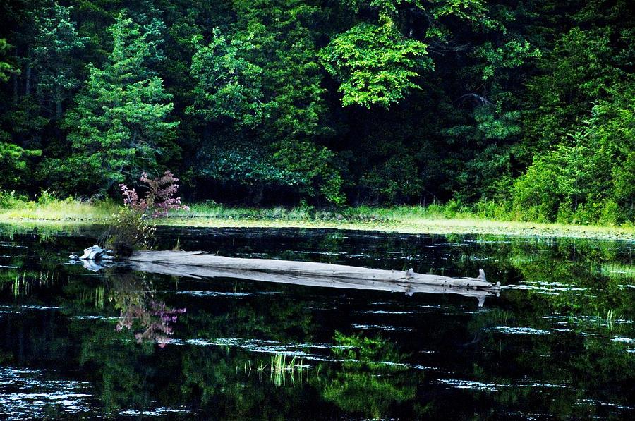 Fallen Photograph - Fallen Log In A Lake by Bill Cannon