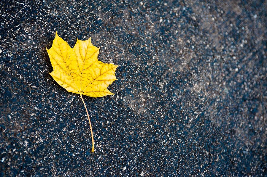 Fall Photograph - Fallen by Sebastian Musial
