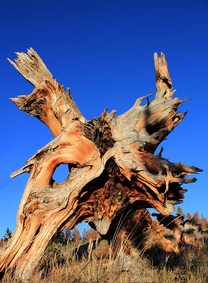 Tree Roots Photograph - Fallen by Shane Bechler
