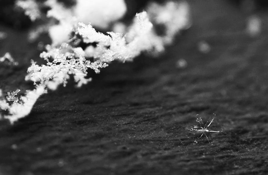 Ice Photograph - Fallen Star by Rona Black