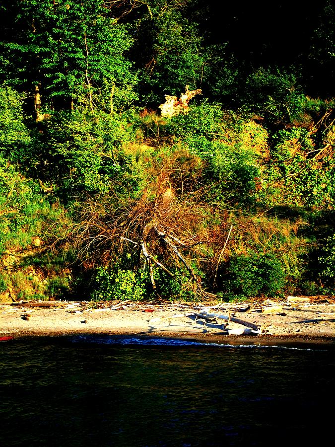 Lake Photograph - Fallen Tree On The Shore by Mark Malitz