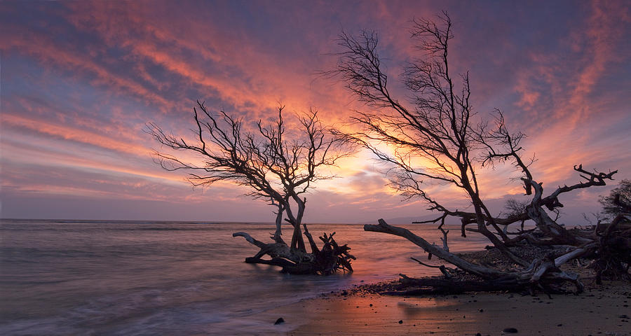 Fallen Trees Photograph by James Roemmling