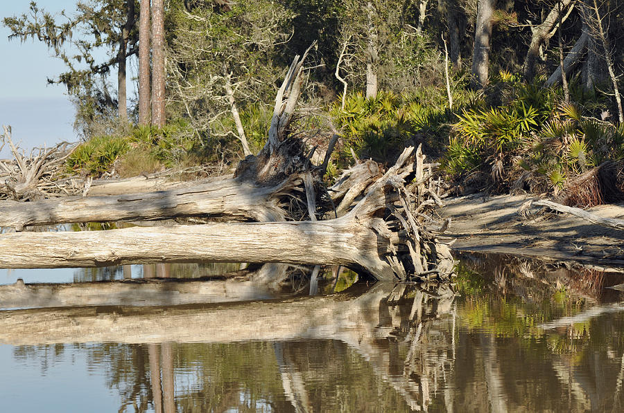 Jekyll Island Photograph - Fallen Trees Reflected In A Beach Tidal Pool by Bruce Gourley