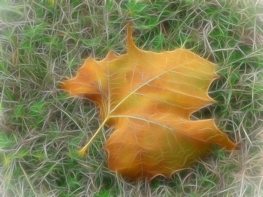 Leaf Digital Art - Fallen by Wendy J St Christopher