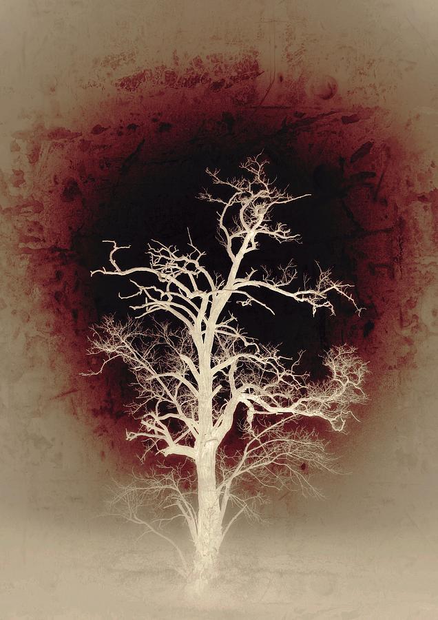Falling Photograph - Falling Deeper... by Marianna Mills