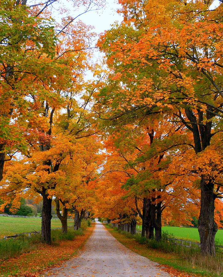 Autumn Scenery Photograph - Falling For Country Farm by Lingfai Leung