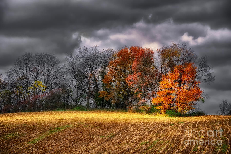 Field Photograph - Falling Into Winter by Lois Bryan