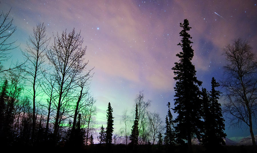 Aurora Photograph - Falling Star And Aurora by Ron Day