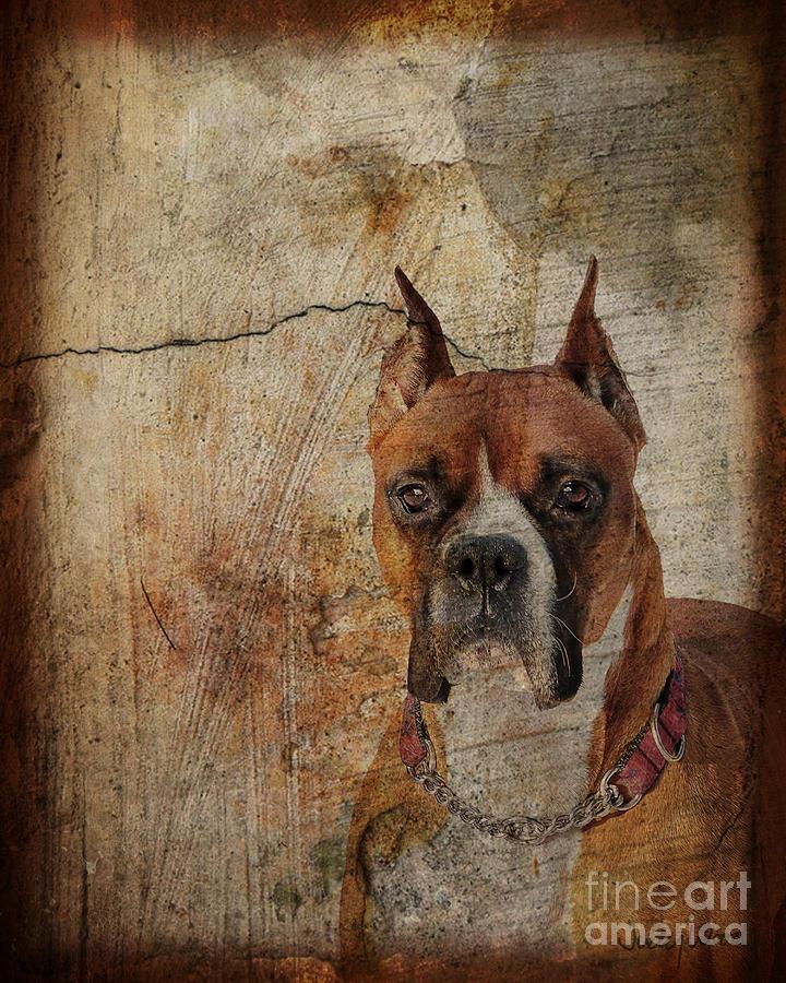 Dog Digital Art - Falling Through The Cracks by Judy Wood