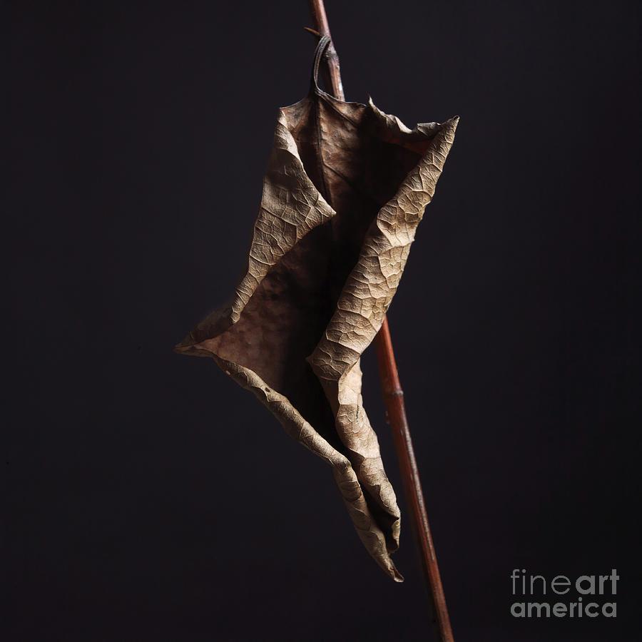 Indoors Photograph - Fallopia Japonica by Bernard Jaubert