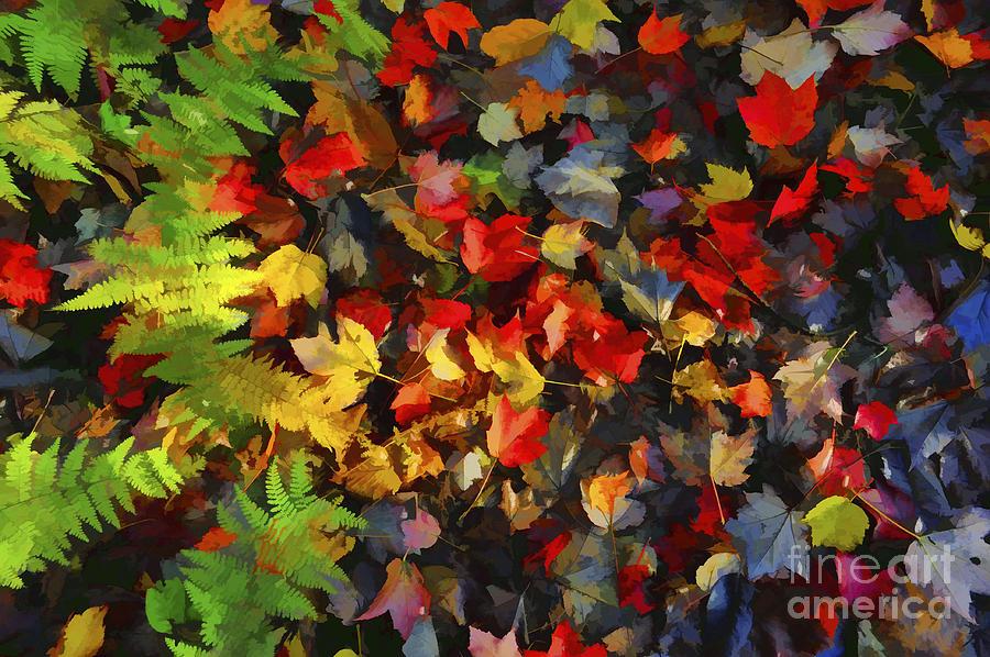 Leaves Photograph - Falls Color Palette by Dan Friend