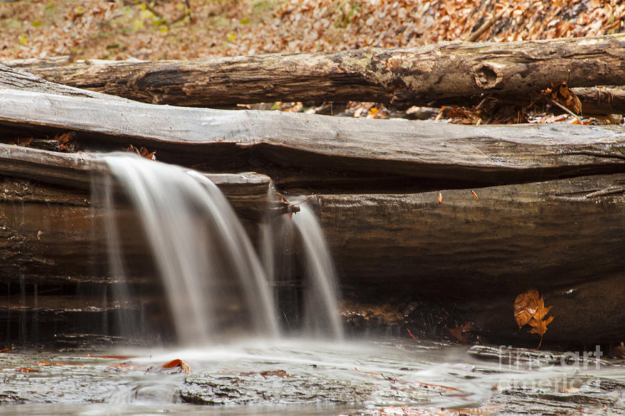 Waterfall Photograph - Falls Through A Tree by Darleen Stry