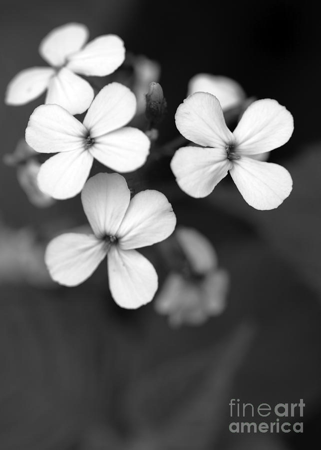 Floral Photograph - Family by Amanda Barcon