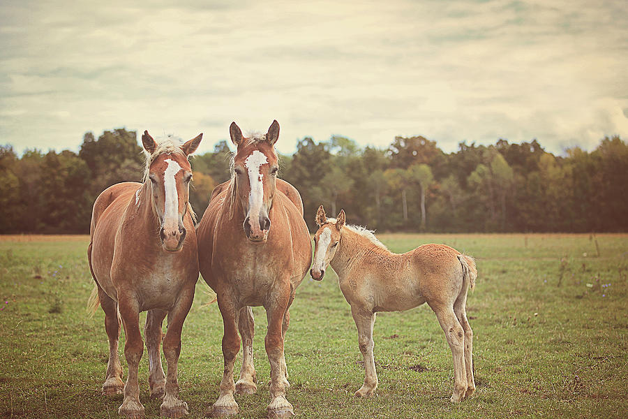 Nature Photograph - Family by Carrie Ann Grippo-Pike