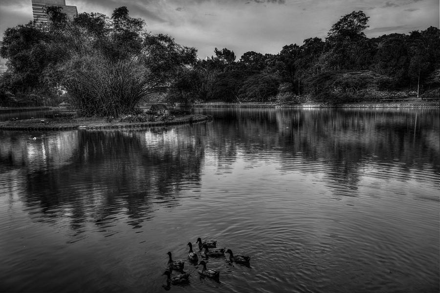 Duck Photograph - Family by Mario Legaspi