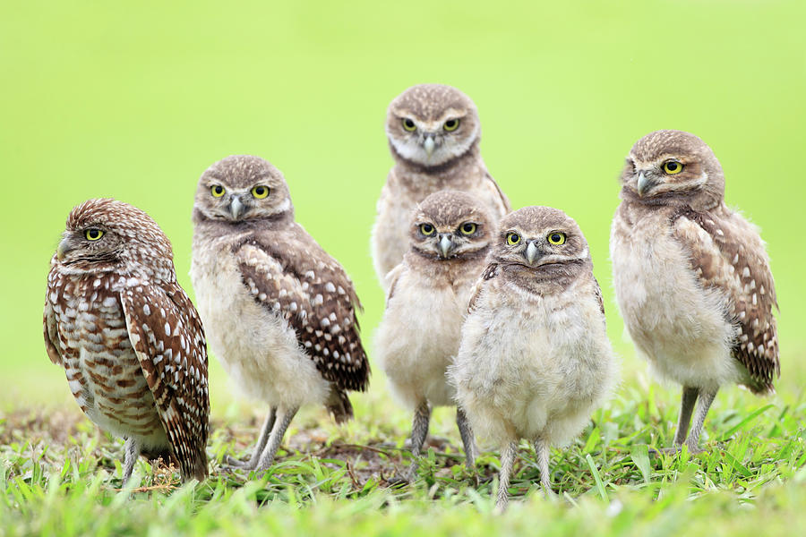 Family Photograph by Mlorenzphotography