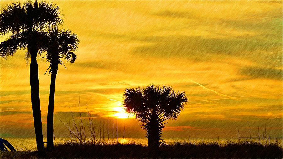 Family Of Palms Sunset Photograph