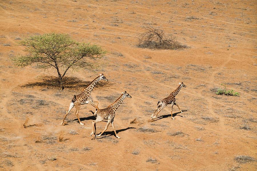 Kenya Photograph - Family Paradise by John Fan